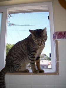 Lily in her new favorite spot - the bathroom window